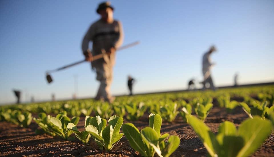 Agrobanco inyectó 68 millones de soles que beneficiaría a la agricultura familiar